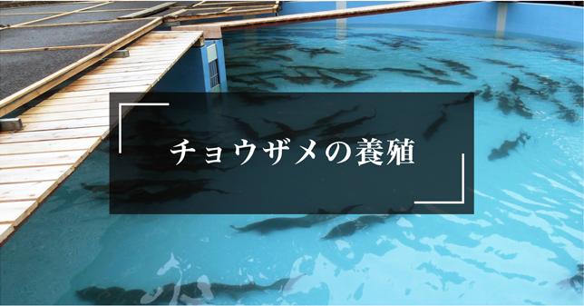 チョウザメの養殖